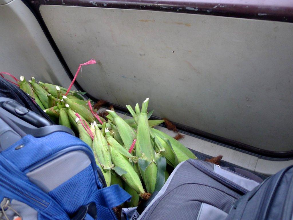 indo2012-derawan-010.jpg