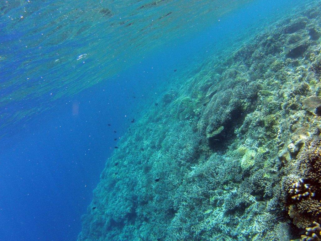 indo2012-derawan-109.jpg
