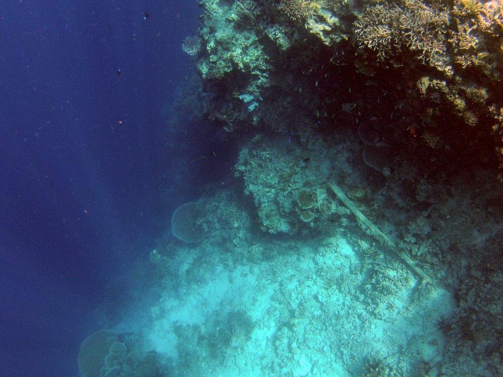 indo2012-derawan-121.jpg