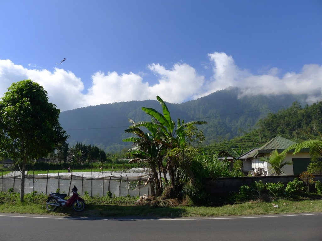 indo2012-bedugul-angseri-028.jpg
