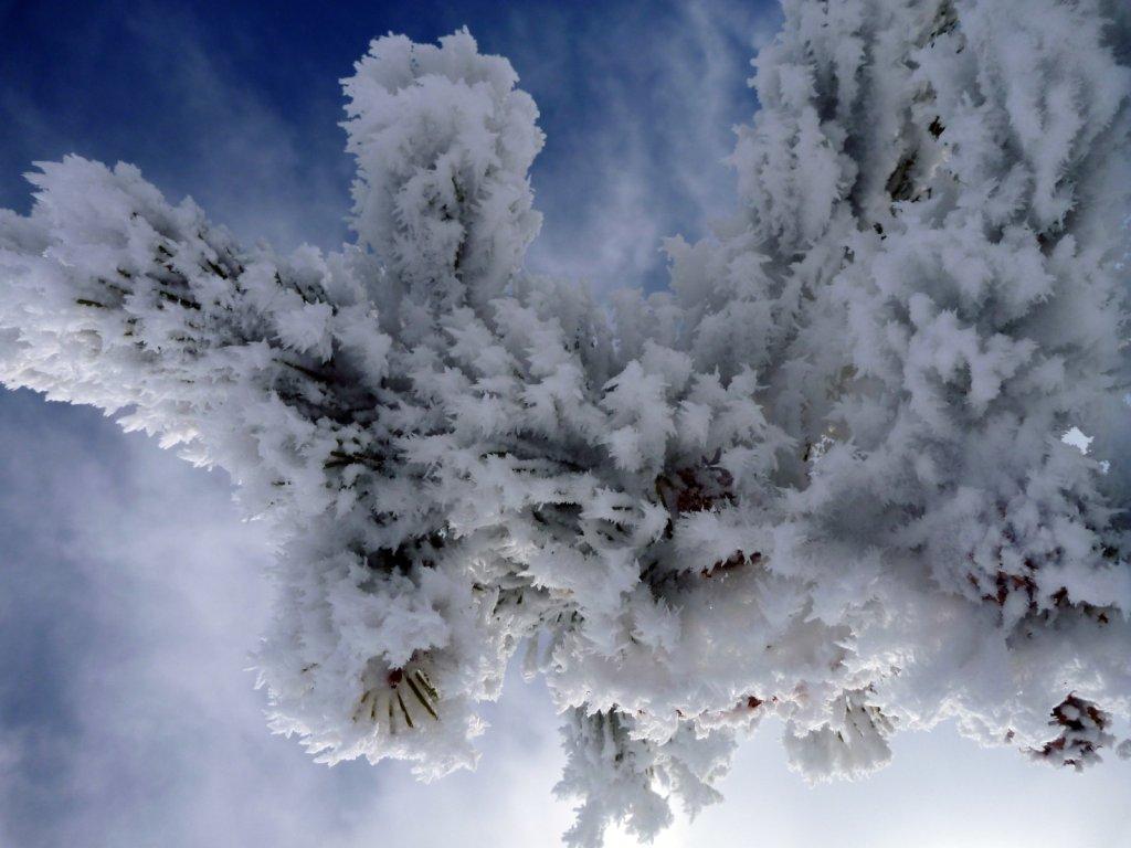 tahoe-2011-018.jpg