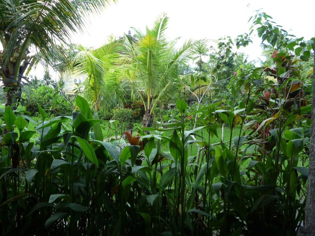 indonesia-ubud-018.jpg