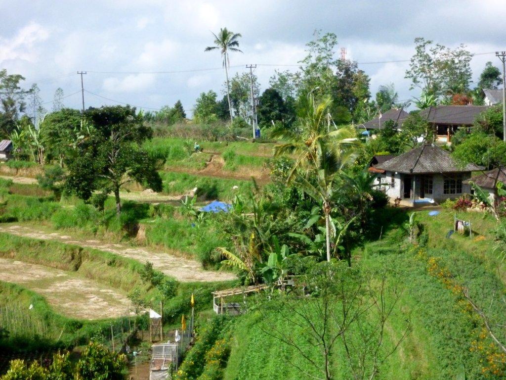 indonesia-bedugul-029.jpg