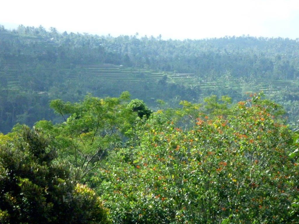 indonesia-bedugul-026.jpg
