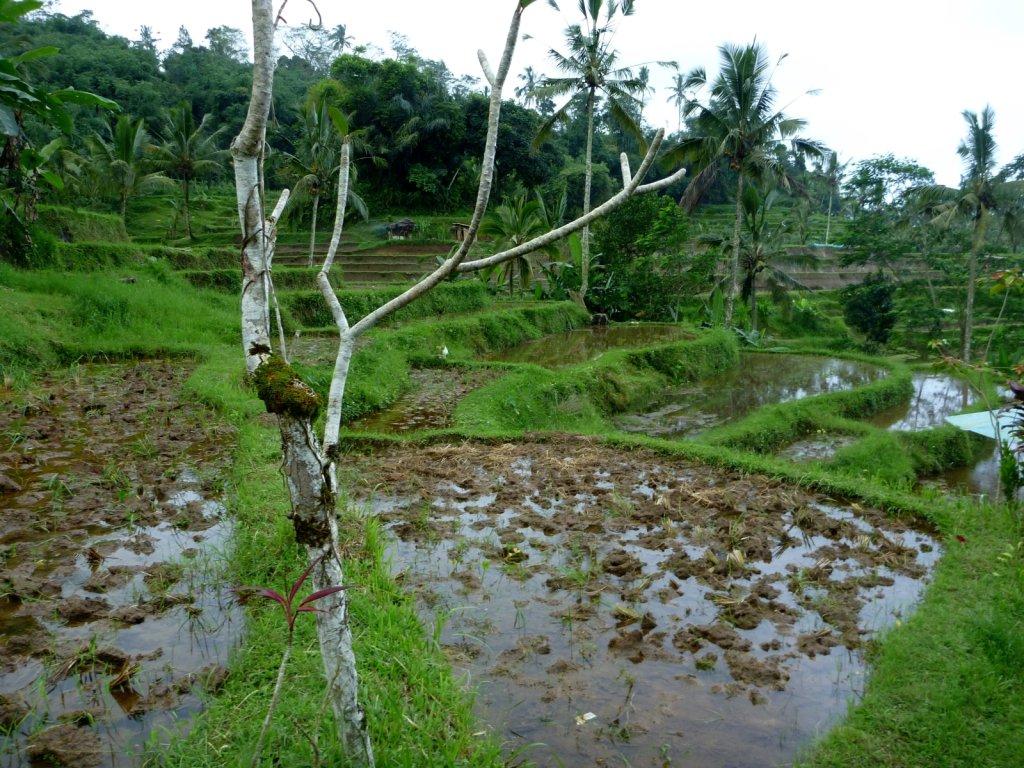 indonesia-bedugul-020.jpg