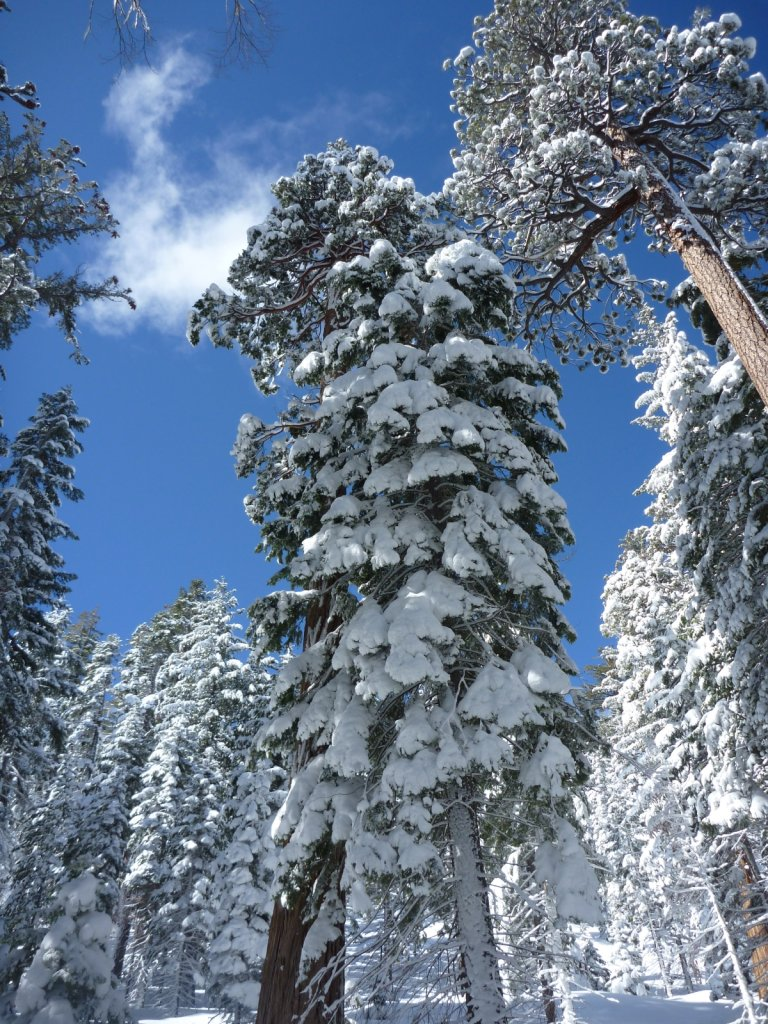 snow-months-2010-025.jpg