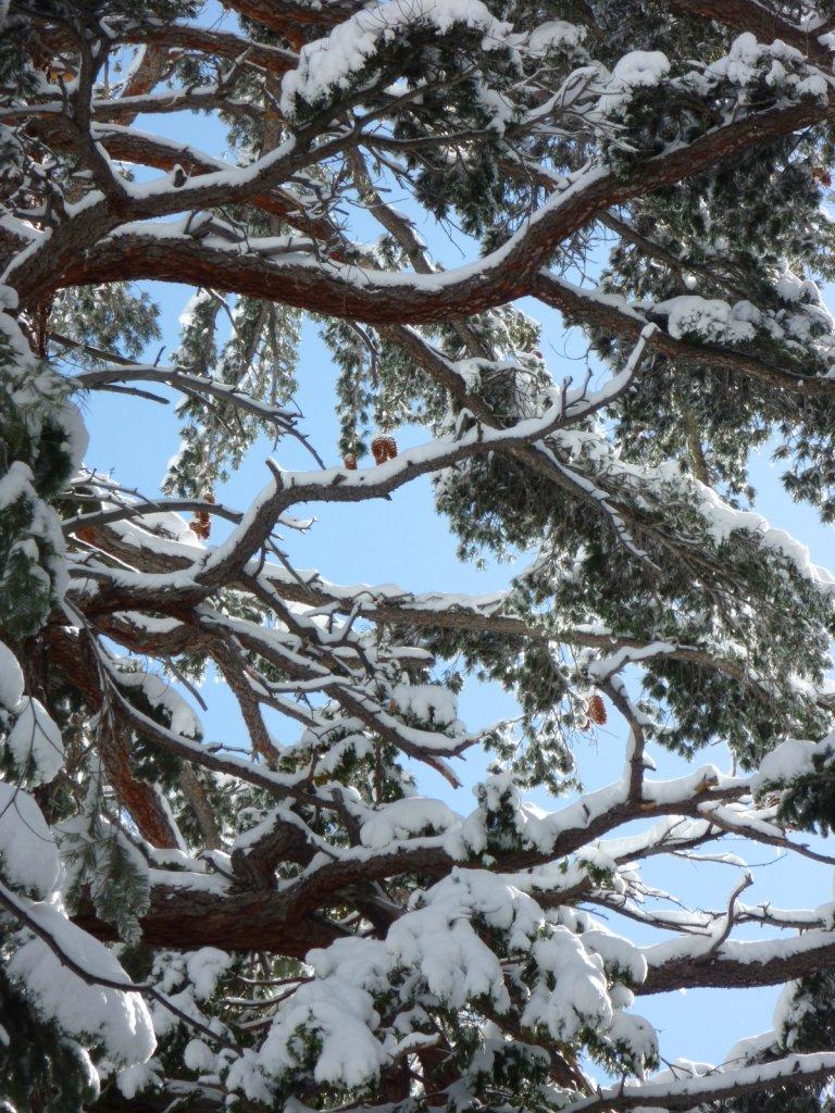 snow-months-2010-023.jpg
