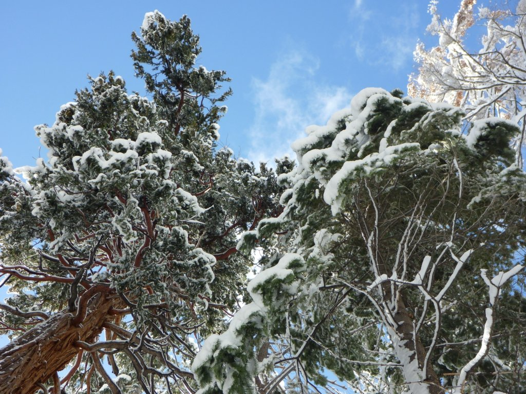 snow-months-2010-022.jpg
