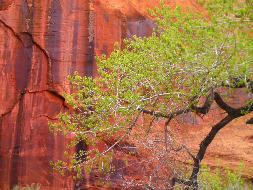 escalante-canyoneering-2009-059.jpg